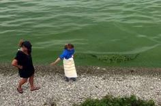 This year's disgusting, green algal bloom in Lake Erie was the most severe on record