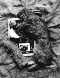 how to explain pictures to a dead hare joseph beuys