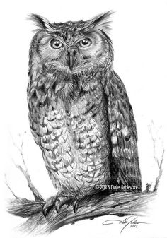 'Owl' by Dale Jackson
