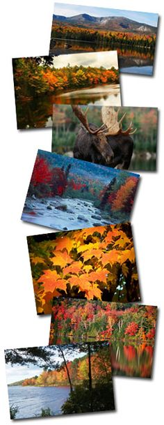 Maine to see the the fall colors MaineFoliage.com - Maine's Official Fall Foliage Website
