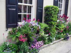 Charleston's wonderful window boxes.  Great article with a list of cool and warm weather box plants.