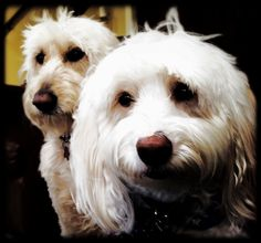 Waiting for a treat...Lucy & Mozart
