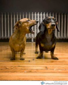 I wished this worked our our doxie...