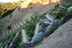 A Hillside Winery Vegetable Garden - Pith + Vigor - Cultivating ...