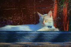 Cat Window by Nikolyn McDonald