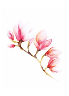 Magnolia,  print A4, 21x30cm, 210x297 mm on Etsy, $23.00