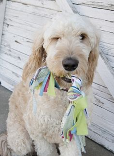 """This will be great for my four legged friends :-).....""""Easy Handmade Jersey Knit Dog Toy 