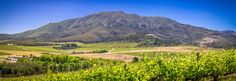 The emerald green vines, the warm golden hues of the wheat fields, majestic mountains, white-washed Vernacular Cape Dutch walls and the variegated sunsets with their memorable starry nights. Cape Dutch, Wheat Fields, Starry Nights, Emerald Green, Sunsets, Property For Sale, Vines, Golf Courses, How To Memorize Things