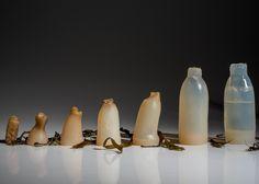 ペットボトル問題の解決策。食べられるし何度も使える藻類でできたボトルを開発(アイスランド) : カラパイア