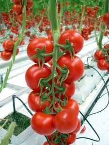 Firmamız organik tarım firmaları arasında öncü olma hedefiyle sizlere en kaliteli üretimi sağlamaktadır. http://www.semayakas.com/organik-tarim-firmalari/ #semayakas