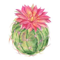 This item is unavailable - Cactus Watercolor Clipart Blossom Succulents Hand Painted - Cactus Painting, Watercolor Cactus, Watercolor Print, Painting & Drawing, Watercolor Paintings, Tattoo Watercolor, Painting Tattoo, Cactus Decor, Cactus Art
