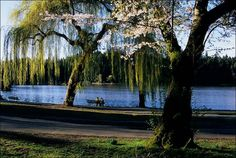 Lost Lagoon, Stanley Park. Vancouver <3