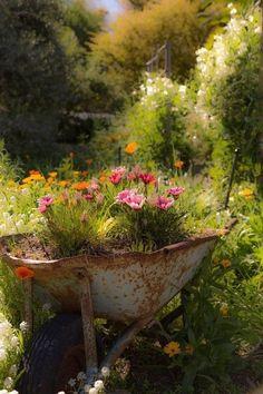 Flowers in old rusty wheel barrel