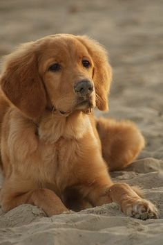 Beautiful photo of this dog at the beach