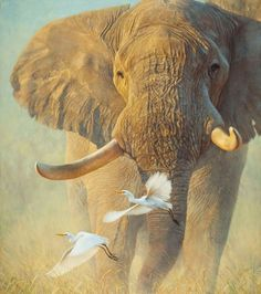 Africa - Artwork - Wildlife Art of John Banovich Asian Elephant, Elephant Love, Elephant Art, Elephant Photography, Animal Photography, Wildlife Paintings, Wildlife Art, Wild Life, John Banovich
