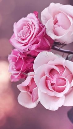 25 Ideas for pretty wallpaper iphone flowers pink Ps Wallpaper, Floral Wallpaper Iphone, Flower Wallpaper, Nature Wallpaper, Wallpaper Backgrounds, Amazing Wallpaper, Wallpaper Ideas, Best Iphone Wallpapers, Pretty Wallpapers