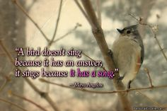 """""""A bird doesn't sing because it has an answer, it sings because it has a song."""" ~ Maya Angelou"""