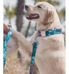 Collar para perro Brott textura Alella