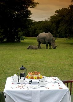 morning coffee with the rhinos - Africa