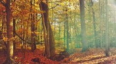 Autumn in the Midwest, Rocky River, Ohio by Oscar de la Peña