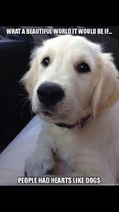 Especially if they were like golden retriever hearts! Cute Puppies, Cute Dogs, Dogs And Puppies, Doggies, Pyrenees Puppies, Funny Dogs, Animals And Pets, Funny Animals, Cute Animals