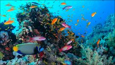 http://news.xpertxone.com/malaysia-comes-up-with-1-million-hectare-marine-park-allows-commercial-fishing/