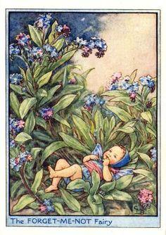 Het vergeet-me-nietje. Tussen de vergeet-me-nietjes ligt, met opgetrokken knietjes, een klein kindje op de grond. Kijk, ze trekt met beide handjes blauwe bloemen van de plantjes, en die stopt ze in haar mond ! Op de zachte groene blaadjes houdt ze kleine pruttel-praatjes, tegen alles wat ze ziet. Zou haar moeder dat wel weten, of is die haar kind vergeten ? Nee, dat is ze zeker niet !