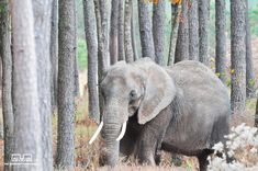 Nosey the elephant is free from her abusers—Twitter can't stop celebrating, and neither can we.