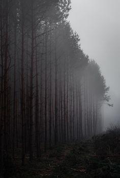 dennybitte:  misty woods by Denny Bitte