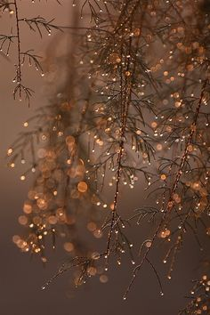 Twinkly branches. - as seen in collection no. 05 by linenandlavender.net - http://www.pinterest.com/linenlavender/ll-collection-no-05/