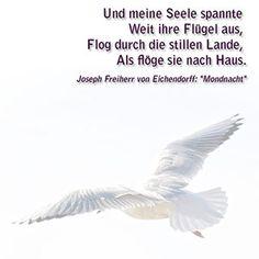 And my soul Far stretched her wings, Flying through the quiet land As if she flew home.  --  Und meine Seele spannte Weit ihre Flügel aus , Flog durch die stillen Lande , Als flöge sie nach Haus .