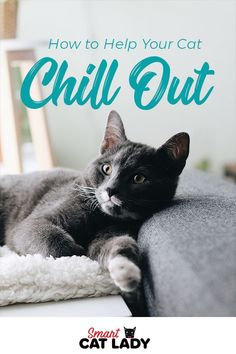 There will be times when a cat gets too worked up and in case that happens it's ideal to know how to deal with it. Here's how you can help your cat chill out and calm down.    #cat #chill #calm