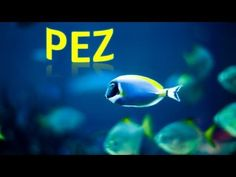 ▶ ¡Bajo El Mar! Animales Marinos Para Niños, Sea Animals in Spanish for Children (Canción Infantil) HD - YouTube