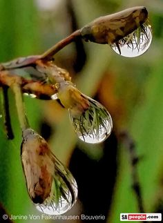 Raindrops are always beautiful. In a drought, they are beautiful AND life-giving. Praise God for the blessings of rain.