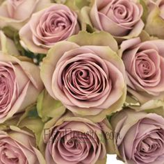FiftyFlowers.com - Amnesia Lavender Novelty Rose