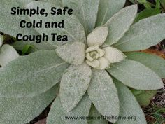 Simple, Safe Cold and Cough Tea - Keeper of the Home