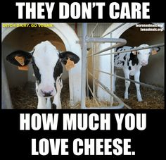 Pro vegan: Ditch dairy. The dairy industry is the veal industry.