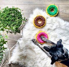 En voilà un pitou choyé!  #muramur #mam #dog #toys #donut #whitefur #plants #green #homesweethome #homedecor #interiorinspo #instahome #regram  @leighkiyoko