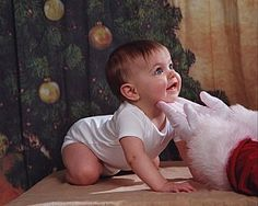 Somebody please do this with their baby for a Christmas card!!!!  Too adorable to handle. christmas backdrop ideas for photography - Google Search