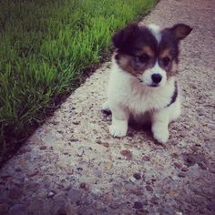 Look @ this little guy!! Too cute :)