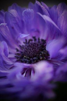 Purple Flower by Shin Yamanobe