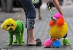 20 Best New Trend For Dogs In China images in 2012 | Pets