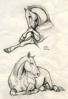 Discover thousands of images about How to draw horses. My friend Meghan really loves horses, so I geuss that I gonna to make a horse sketch for her! Realistic Animal Drawings, Horse Drawings, Cool Drawings, Drawing Sketches, Drawing Ideas, Sketching, Pencil Drawings Of Animals, Draw Animals, Cartoon Drawings