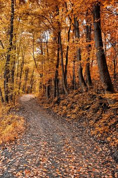 Ramble On by Bill Cannon ✮ Ramble On Isnt this where Frodo, Sam, Merry and Pippin left the road to hide from the black rider? Autumn Scenes, Autumn Aesthetic, All Nature, Foto Art, Fall Wallpaper, Autumn Photography, Fall Pictures, Autumn Inspiration, Fall Season