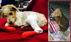 Heartless thugs throw puppy into burning trash bin at Minnesota dump leaving him with horrific injuries  http://www.dailymail.co.uk/news/article-2966202/Truck-driver-hailed-hero-saving-starved-puppy-left-dead-burning-trash-bin-Minnesota-garbage-dump.html