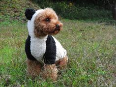 Super cute :) You can make very cute Rabbit & Panda costume with 1 pattern! Dog ware PDF pattern of rabbit & Panda costume with detailed recipe pages). Panda Dog Costume, Panda Costumes, Diy Dog Costumes, Costume Ideas, Small Dog Clothes, Pet Clothes, Pet Style, Dog Pajamas, Dog Clothes Patterns