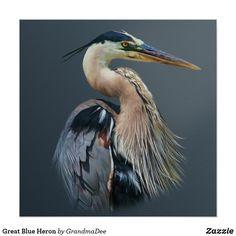 bird artwork - Great Blue Heron Poster Zazzle com Tropical Birds, Colorful Birds, Photo Animaliere, Bird Artwork, Shorebirds, Blue Heron, Sea Birds, Wild Birds, Watercolor Bird