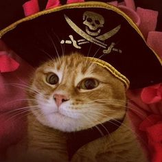 Shiver Me Gingers  #TalkLikeApirateDay #GingerBoss #NaranjitaCat by @catsandfoodie automatic litter box  cat cats kitty cute catlover catsofinstagram catcam instacat catstagram catsagram lovecats cat product reviews