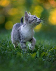 Cat Kurort by sekurit on 500px