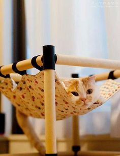 A hammock for kitty!